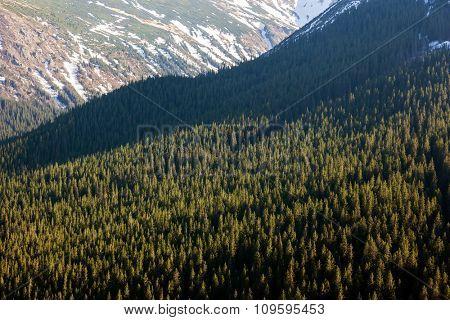 Fantastic sunny day is in mountain landscape. National park Chornogora. Carpathian, Ukraine, Europe. Beauty world