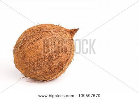 Whole Coconut, Isolated