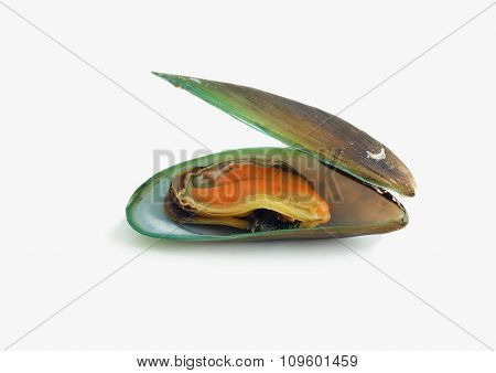 Boiled Mussel On White Background