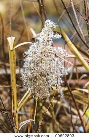Autumn Dry Grass