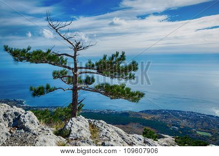 Lonely Tree On A Cliff