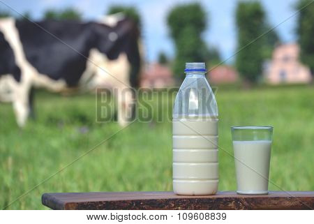 Milk bottle and glass on cow farm background.