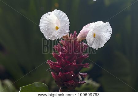 white flowers in jungle of Thailand
