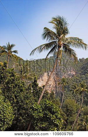 bended palm tree on the background hills
