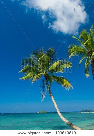 Palm Panorama Jungle Lagoon