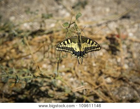 Butterfly, Moclin, Granada, Andalusia, Spain