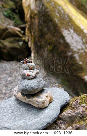 Lady Bug On Stone