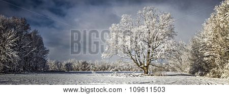 Panoramic Pristine Winter Scenery
