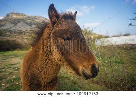 Skirian Horses, Skiros, Northern Sporades, Greece