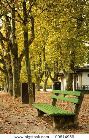 Green bench in a park with yellow leave in trees during fall season