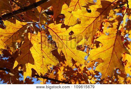 Bright Autumn Branch