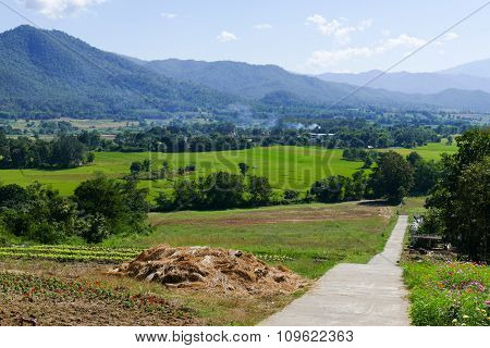 Vegetable Plot And Flowerbed With Mountain And Paddy View
