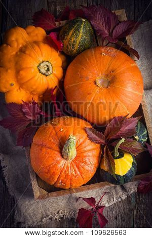 Pumpkins And Autumn Colored Leaves On Wooden Tray