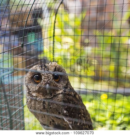 Owls Are Sitting In Cage. Travel Photo In Local Bird Market In Indonesia.