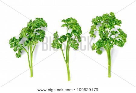 Three Parsley On White Background.