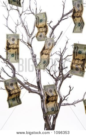 Money Tree 1