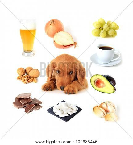 Chart of toxic foods for dogs. Also available with English text.