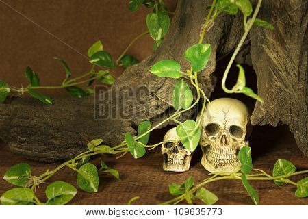 Still Life With Two Skulls
