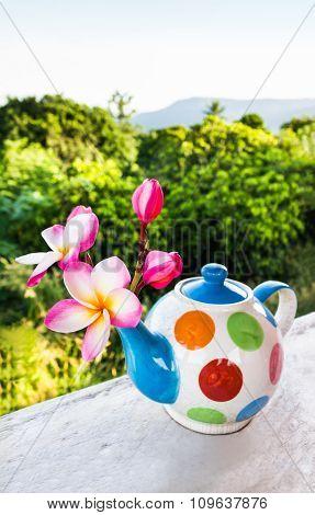 Lovely Plumeria Flower In Colourful Tea Pot