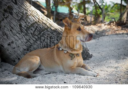Dog Under Palm Tree
