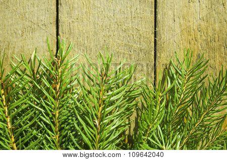 Fir tree on wooden boards