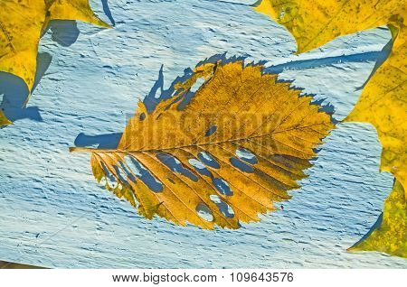 Autumn Leaves over blue