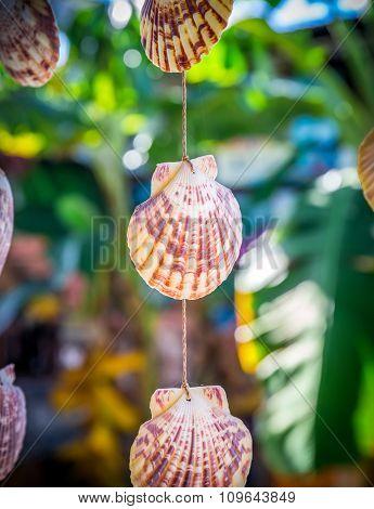 Sea Shells Souvenirs