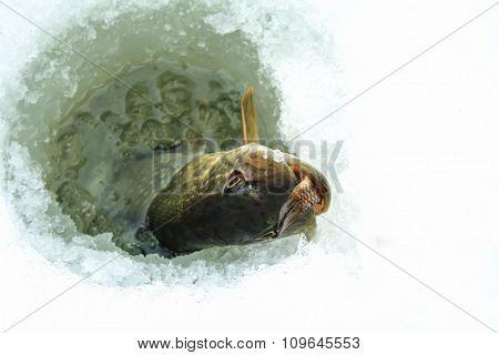 Winter fishing on ice