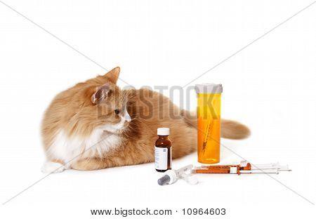 Gato mirando la medicación