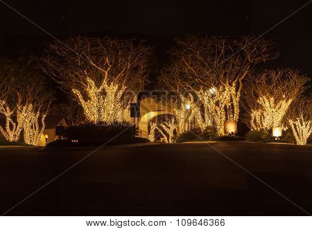 Holiday lights among trees and an arch