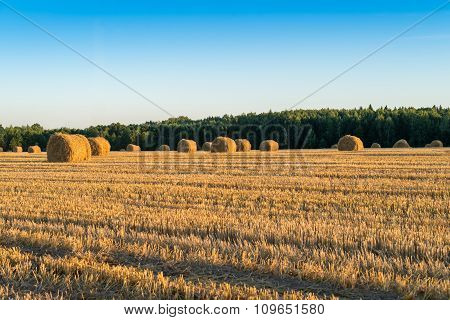 Straw Bale On The Field After Harvest