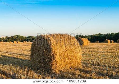 Straw Bale On The Field After Harvest. Focus Foreground