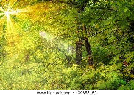 Dense Forest And Trees In Magic Light.
