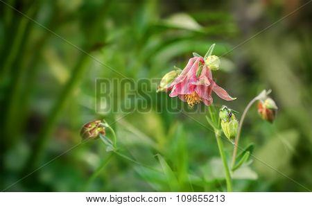 Pink Garden Flowers Bells