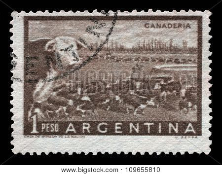 ARGENTINA - CIRCA 1954: A postage stamp printed in Argentina shows a heard of beef cattle in the Argentinean walking through a gate in a fence, circa 1954.