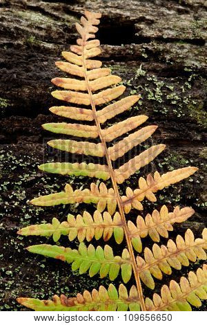 Golden fern leaf fall on a tree trunk