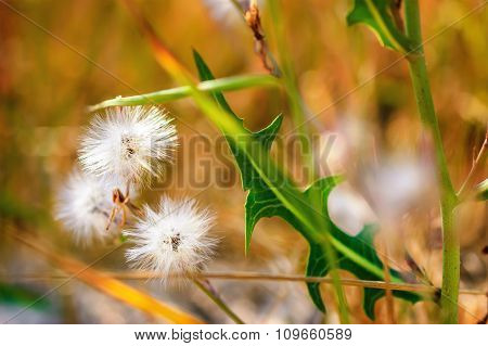 Abstract Natural Background With The Wild Flowers