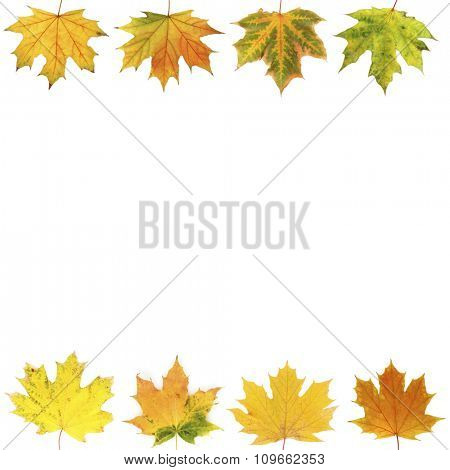 Different autumn leaves, isolated on white