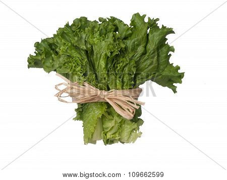 Green Lettuce Bouquet With Sting Isolated On White