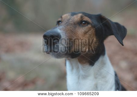 Dog portrait, cute terrier looking away, outdoor in a winter forest