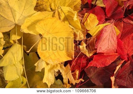 Background of colourful autumn leaves, close-up