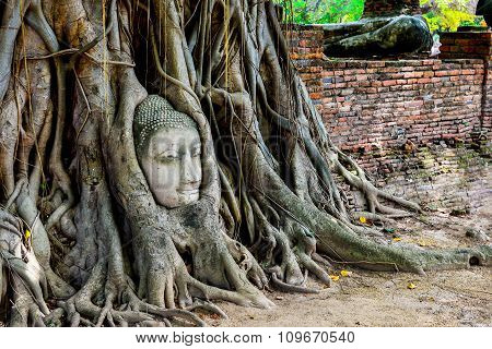 The Head Of Buddha In Tree
