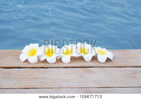 Frangipani flowers in a row on wooden pier