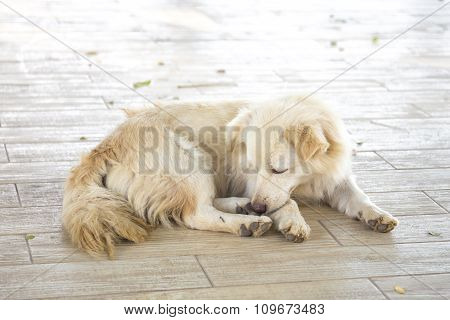 The Dog Has A Rest