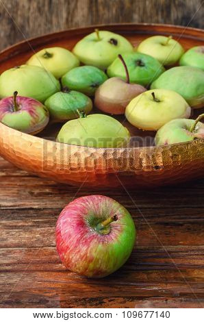 Autumn Harvest Of Apples