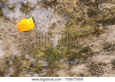 Small Yellow Leaf Lying In A Puddle Of Rain.