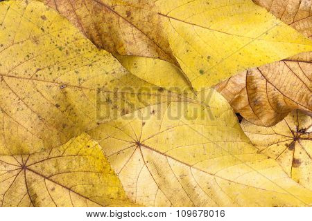 Background Of Yellow Autumn Leaves.