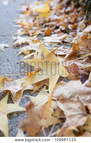 Autumn Leaf On Concrete Floor