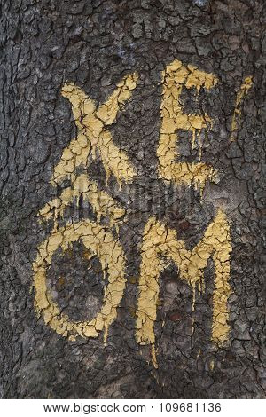 Sign of motor taxi or motorcyclist (Xe Om in Vietnamese) on a tree in Hanoi, Vietnam.
