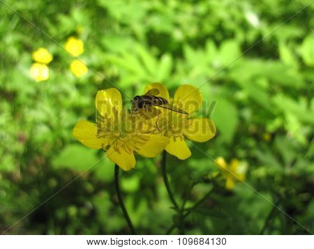 Yellow Blossoming Of Flower And Insect